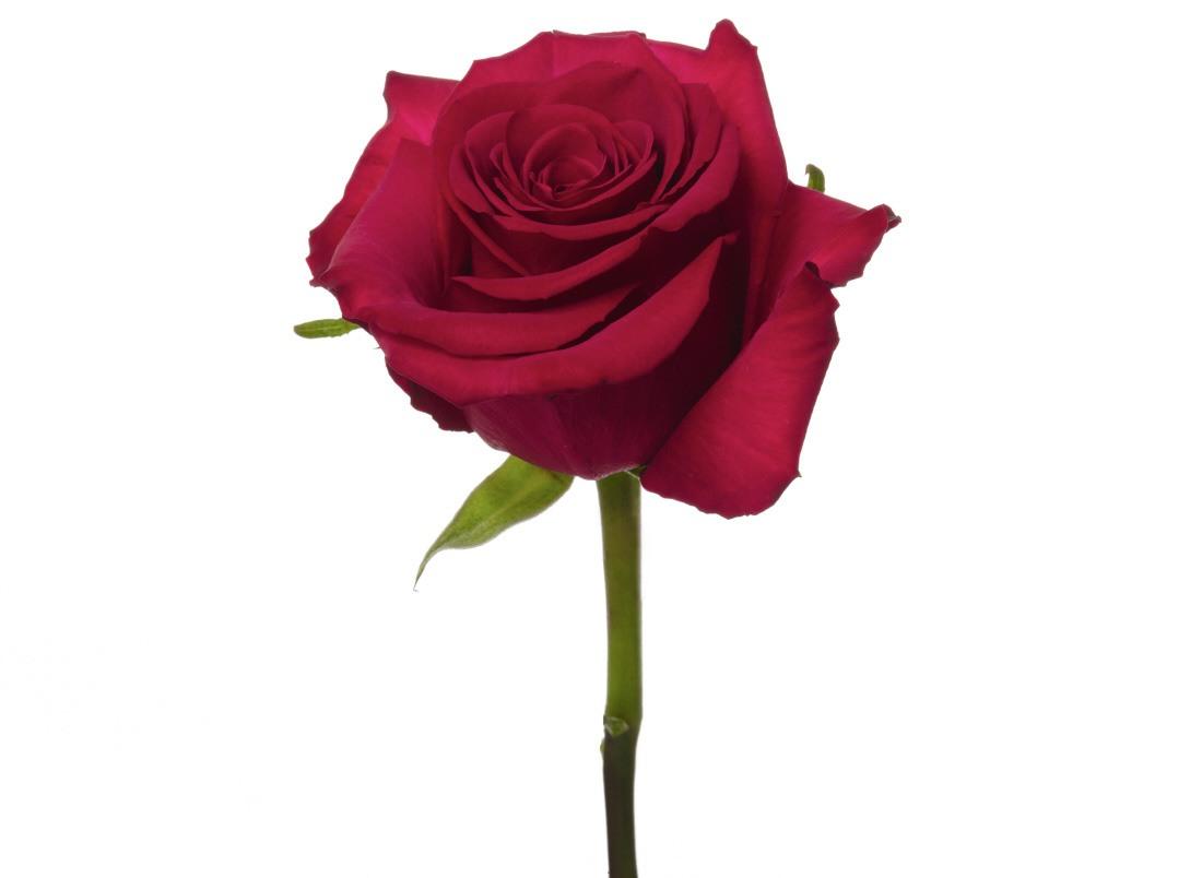 Roseberry_2