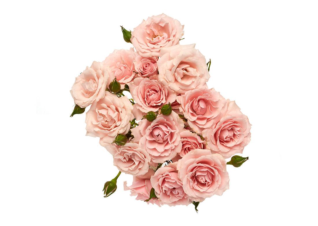 pink-maj-top