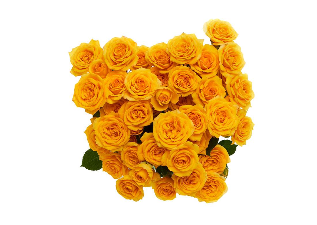 yellow-babe-topn