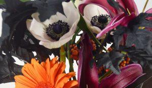 Rio-White-Anemones